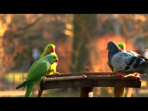 Un jeu sur smartphone pour aider à préserver les oiseaux