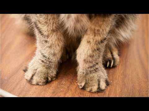New York Closer To Banning Cat Declawing