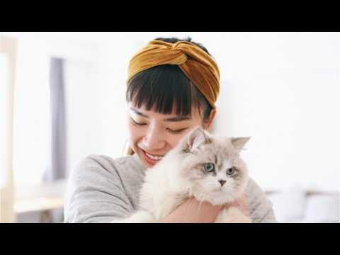 You Love Your Cat,  But Do They Love You Back?