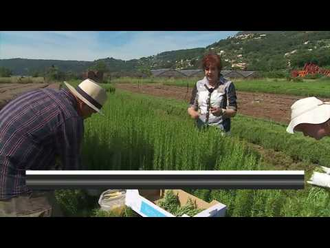 France's Provence region, where herbs are king