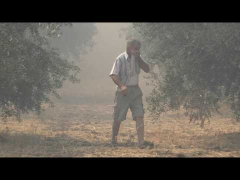 Fire on Greek island causes major damage to wildlife habitat