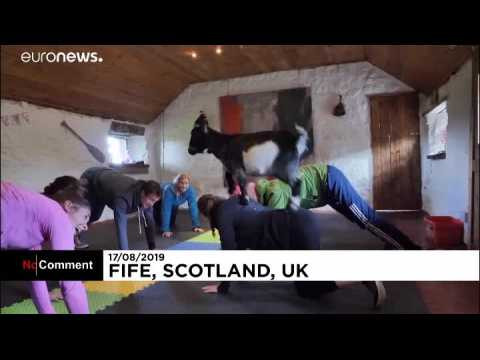 You have got to be kidding! Goat yoga is a thing in Scotland