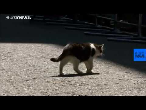 New top dog joins Larry the cat at Downing Street