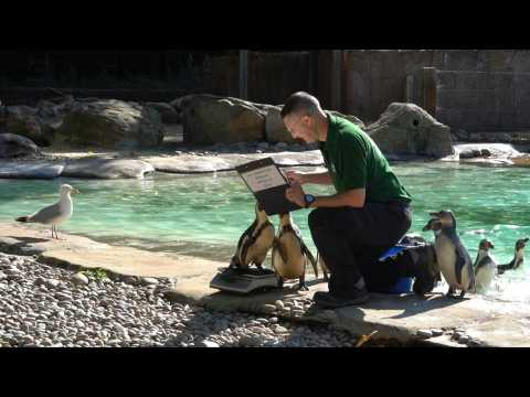 London Zoo holds annual weigh-in of animals