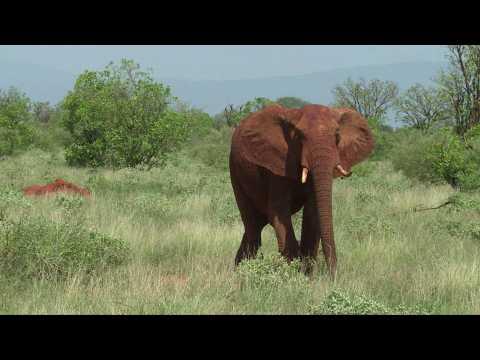NGOs react to near-total ban on sending wild elephants to zoos