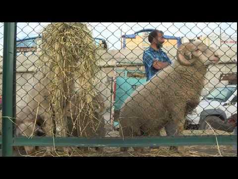 Heartbreak as Kashmiris struggle to prepare for Eid