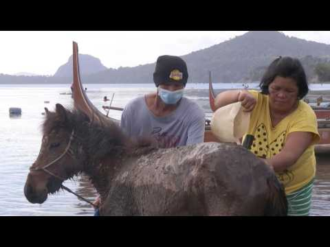Taal volcano: Villagers rescue horses via boats