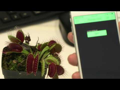 Rise of the 'robo-plants', as scientists fuse nature with tech