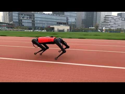 The ulti-mutt pet? Chinese tech company develops robot dogs