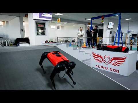 Chinese tech company develops robo dogs