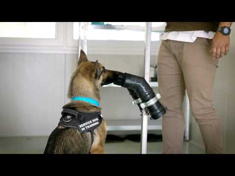 Italian researchers train sniffer dogs to detect Covid-19
