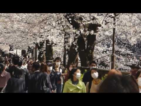 Japaneses flock to view cherry blossoms in full bloom as Tokyo reports new 472 cases of COVID19