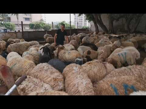 Preparations for Eid Al Adha in Beirut