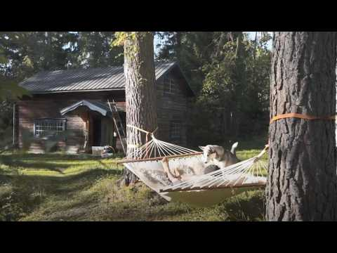 This man left the city to live a simpler life in a forest cabin in northern Sweden