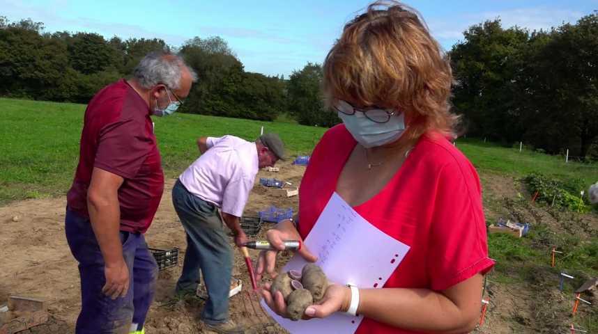 Thumbnail Sauver la biodiversité de la patate !