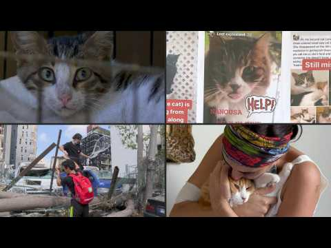 In Beirut, NGO Animals Lebanon reunites people with their lost pets following the blast