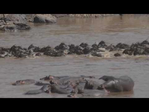 Tourists can't witness Kenya's annual wildebeest migration amid pandemic