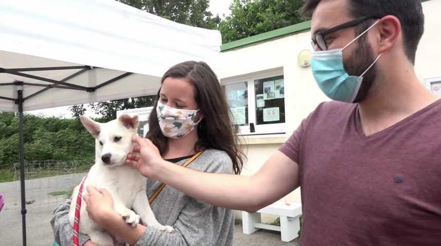 Thumbnail Adoptions d'animaux : la SPA vous attend !
