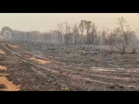 Brazil's Amazon region in August suffers 2nd most fires in past decade