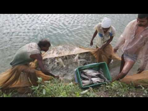 Indian fishermen take advantage of increasing water area for fish farming