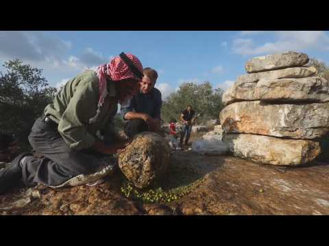 Palestinian farmers make olive oil with the traditional Al-Badd technique