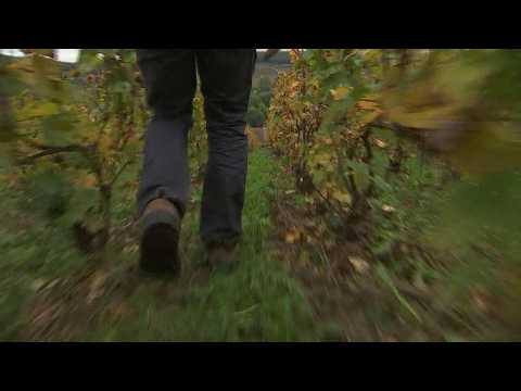 Woodland wonders: Autumn in France's Champagne region