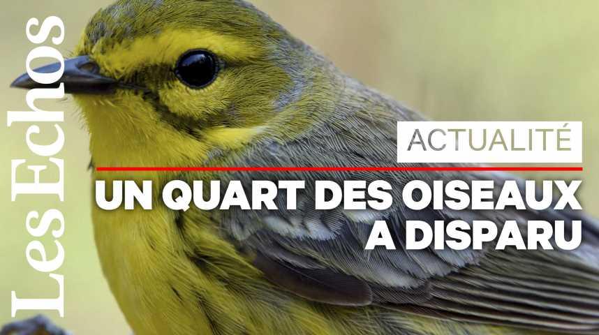Illustration pour la vidéo 3 milliards d'oiseaux disparus en Amérique du Nord depuis 1970