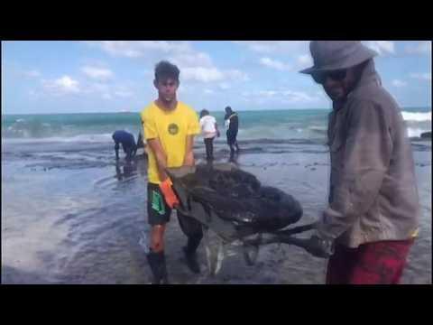 Petroleum sludge strikes popular tourist spot in Brazil