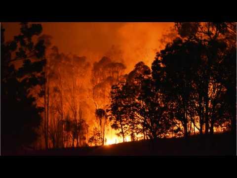 GOP Senate Victories Dampens Hopes For Climate Action