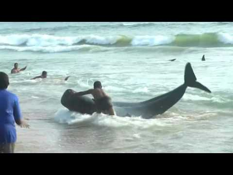 Sri Lanka rescues 120 whales after mass beaching