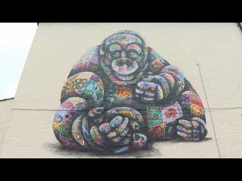 Artist raises awareness of endangered species with colourful murals
