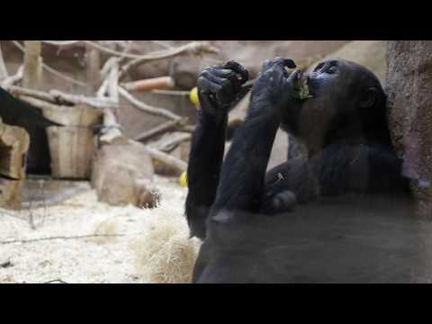 Prague Zoo launches fundraising effort to feed its animals