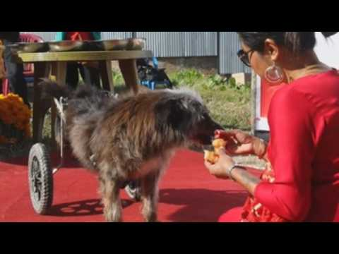 Hindus in Nepal celebrate the second day of Diwali by worshipping dogs