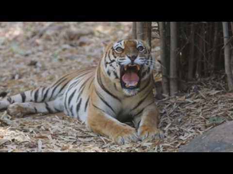 India's Bhopal zoo marks World Wildlife Day