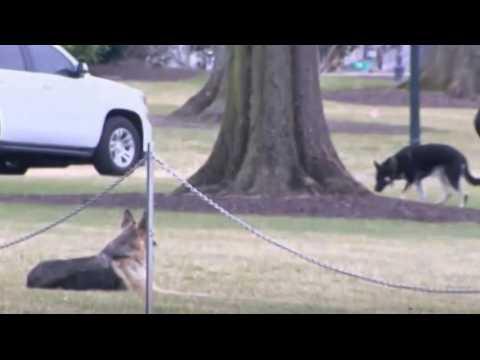 White House: Biden's dogs will return soon, no update on cat