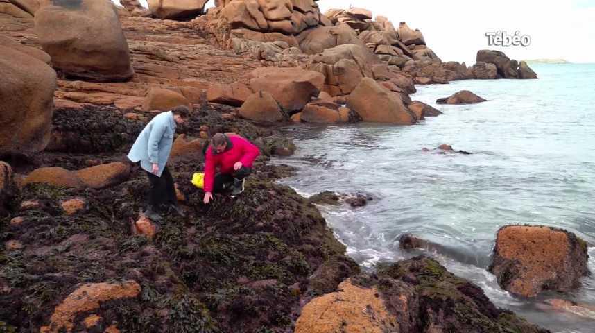 Thumbnail Odycéa : les bienfaits des algues pour notre peau