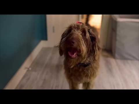 Think Like a Dog - Bande annonce 1 - VO - (2019)