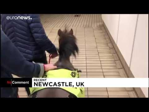 Un poney pour guider les malvoyants bientôt dans le métro londonien ?