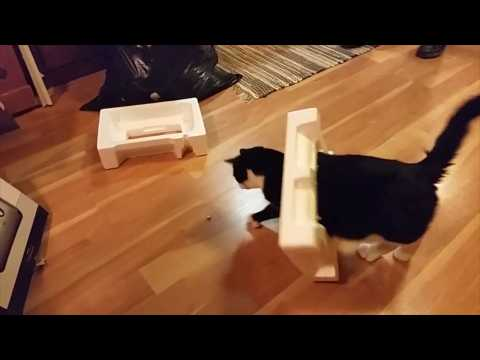 Cats and boxes: A love (and hate) story