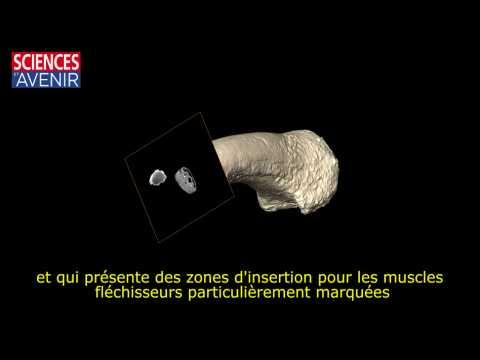Homo luzonensis : pourquoi des pieds et mains si particuliers ?