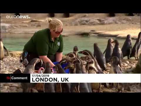 Chasse aux oeufs de Pâques au zoo de Londres