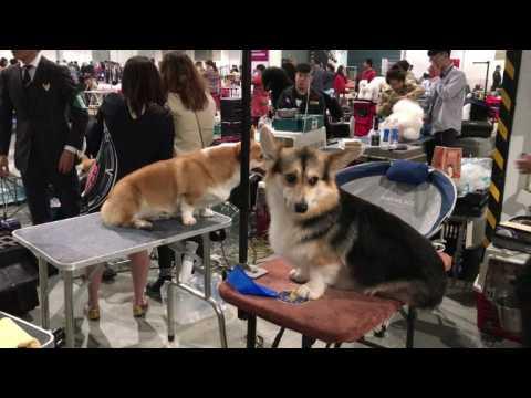 Animal activists slam Shanghai dog show