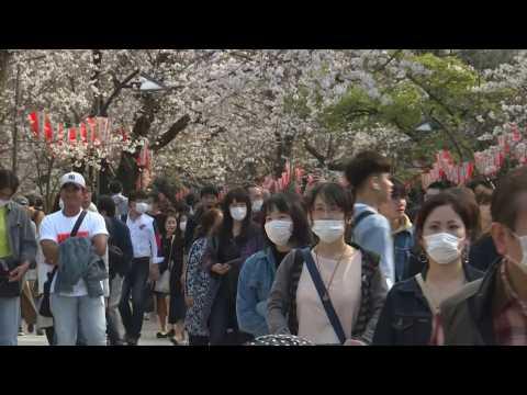 Japan enjoys cherry blossom despite warning over cornavirus
