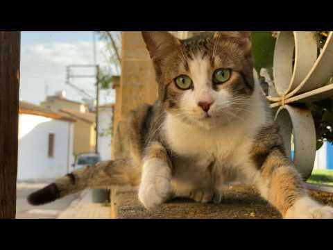Paws patrol the streets of the Cypriot capital in lockdown