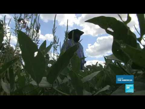 African-American farmers: the uphill struggle against discrimination