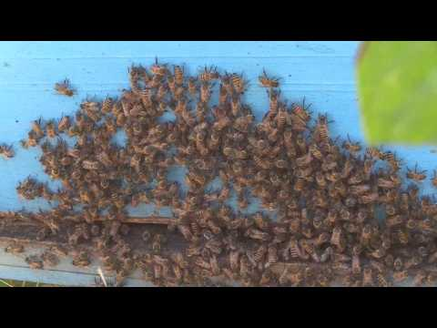 Beekeeping, alternative to unemployment and social crisis in Nicaragua