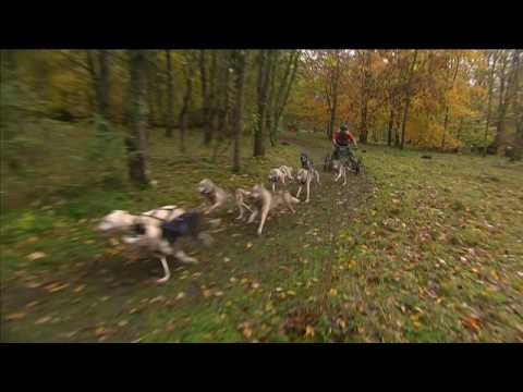 UK: Muddy conditions add to the fun for dry-land dogsledders