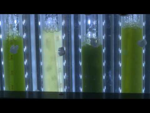 Israeli scientists produce energy from plants