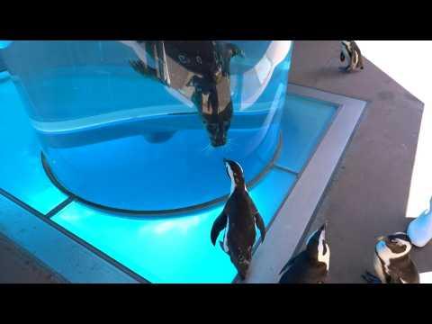Japan aquarium holds inter-species meet-ups during coronavirus crisis