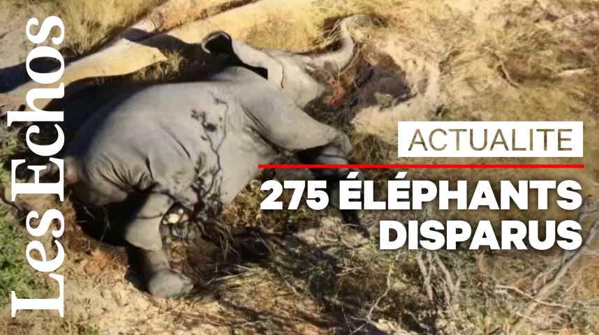 Illustration pour la vidéo Au Botswana, la mort mystérieuse d'au moins 275 éléphants